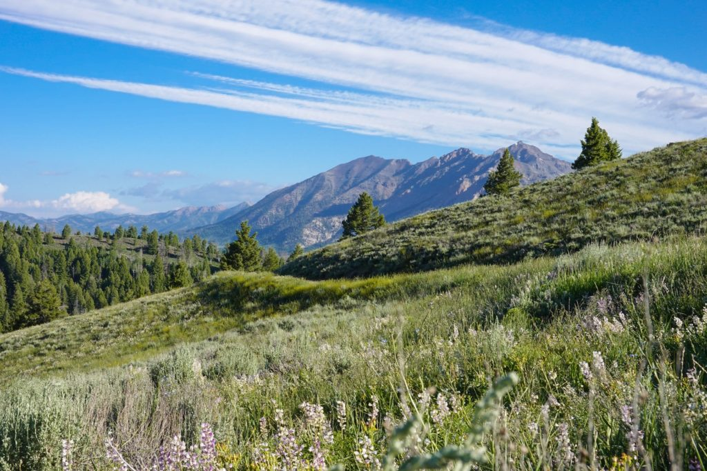An image of the Sawtooth Range in Idaho, one of only 3 states where psilocybin mushroom spores cannot be owned