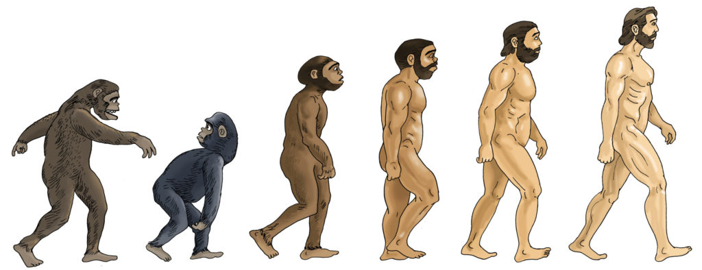 Stoned Ape Theory and the Evolution of Man