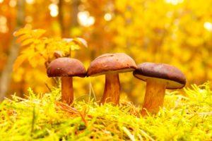 Three mushrooms on a bright yellow background