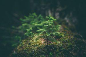A sapling in nature