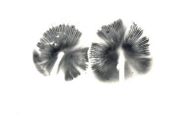 A small image of an unidentified spore print.