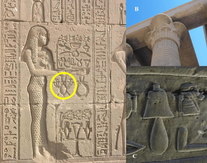 Evidence of mushrooms in ancient Egypt